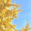 紅葉撮るならこの設定 │ iPhone(アイフォン)のカメラで艶やかな紅葉を撮る方法