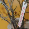 梅で花見なら奈良県立自然公園の月ヶ瀬梅渓 │ 梅まつりのPRで月ヶ瀬の梅をいただきました。