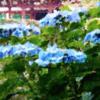 矢田寺(奈良 大和郡山市)の入山料 │ あじさいの時期だけの入山料
